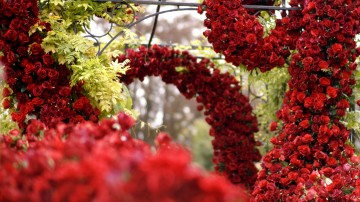 outdoor wedding ceremony monkey island estate floral arch red rose inspiration